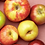 Thumbnail: Variety Pack! Cosmic Crisp®, Opal®, Autumn Glory® & Honeycrisp®