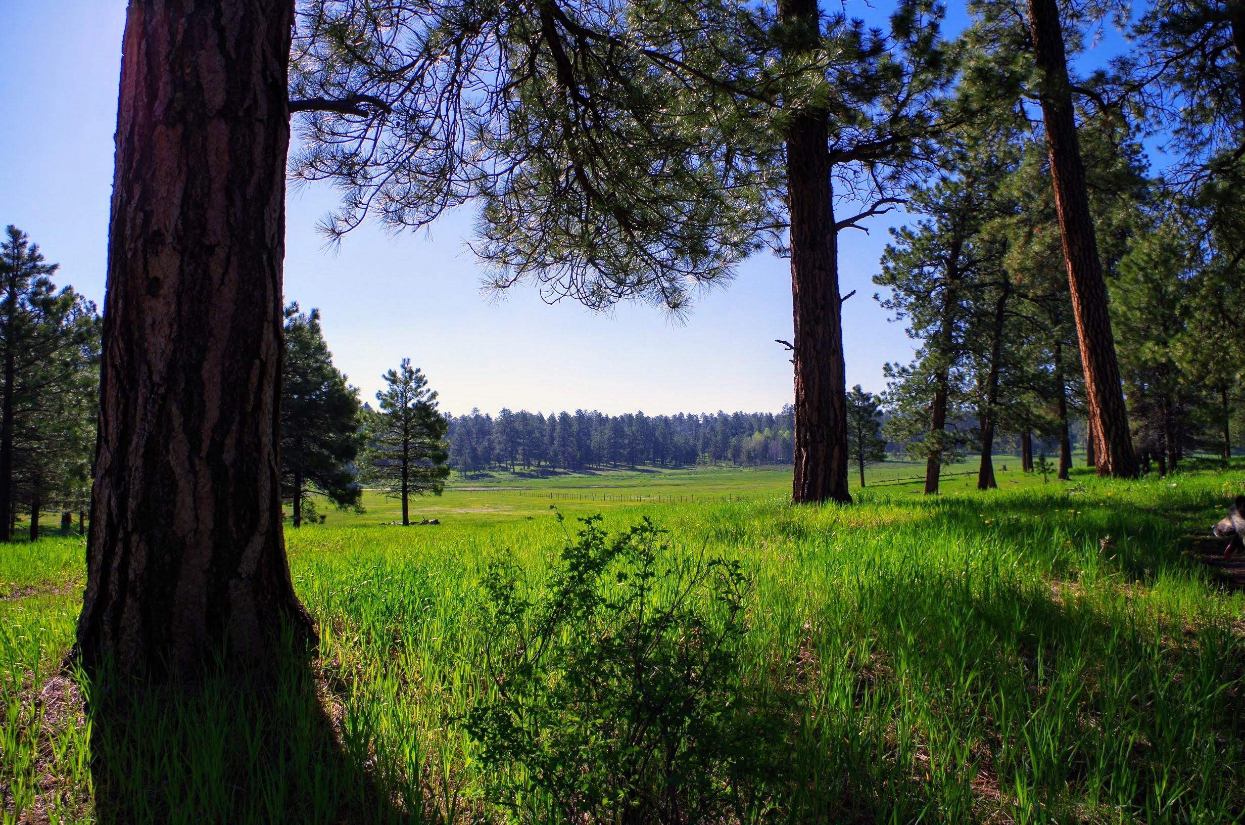 Chris Mountain Meadow Pagosa Springs