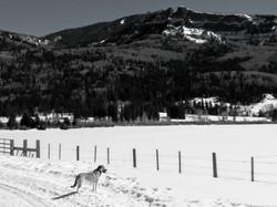 West Fork Valley