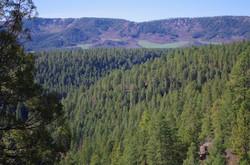 Lower Rim Trail
