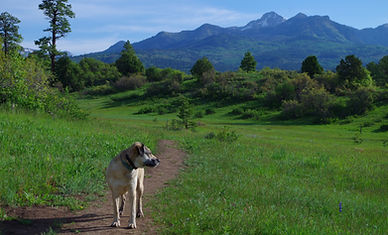 Hike, bike, run the Coyote Hill Loop near Pagosa Springs