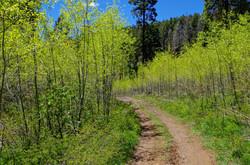 Chris Mountain Trail