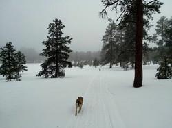 Turkey Springs Trail