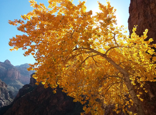 Destination Run: Grand Canyon National Park