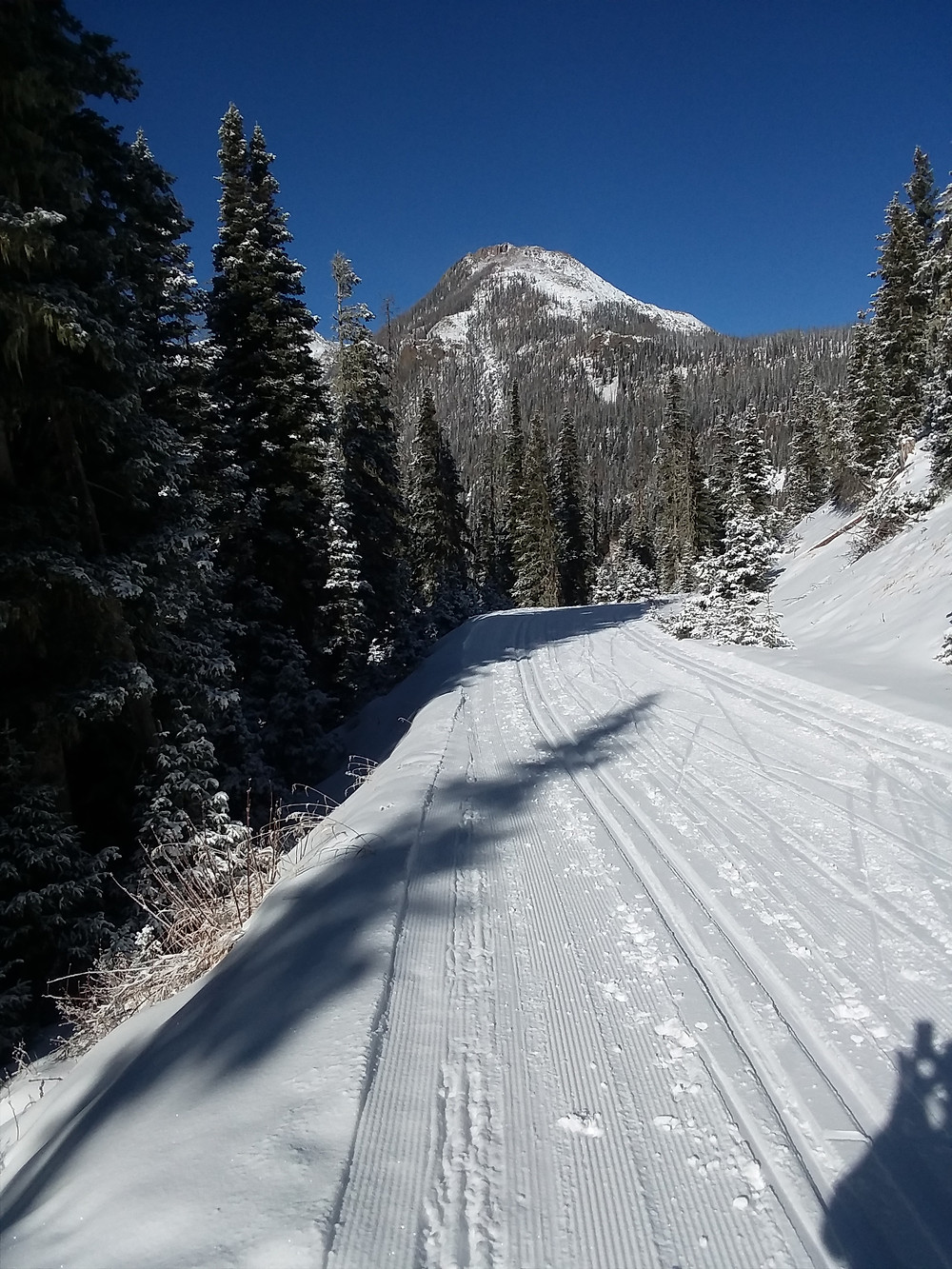 Fall creek road on Wolf Creek Pass