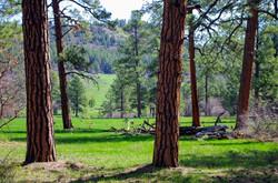 Upper Rim Trail