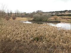 balancing pond.JPG