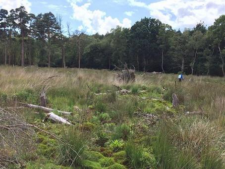 Roudsea Woods and Mosses - LIFE+ peatland restoration framework 2016 and 2017 - Natural England