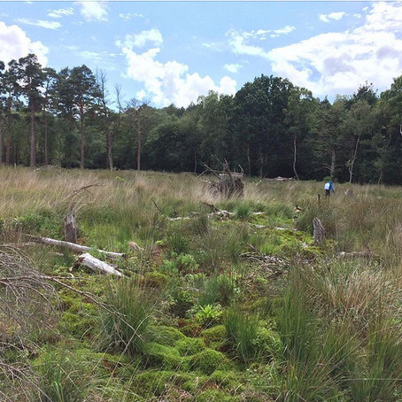 Roudsea Woods and Mosses - LIFE+ peatland restoration framework 2016 and 2017 - Natural England