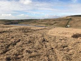 Moorland restoration.jpg