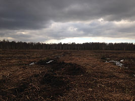 Habitat restoration and Rhody mulching.J