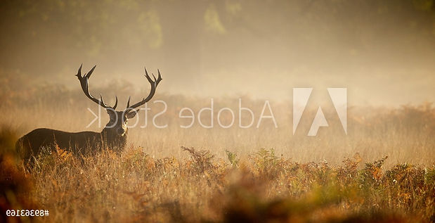 AdobeStock_89363169_Preview%20(1)_edited