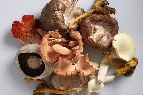 Mushroom Sampler Mix-1 Pound