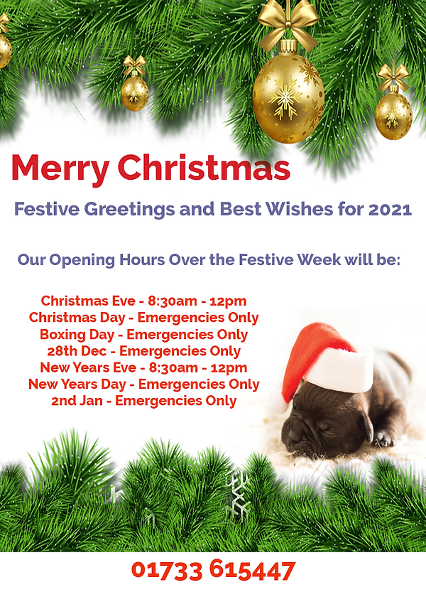 Christmas 2020 email and webpage.png