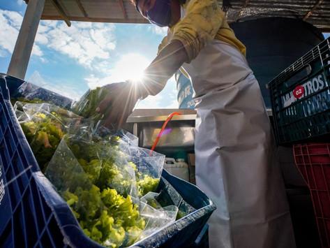 Oportunidade para inovação em agricultura e agronegócio em Santa Catarina