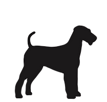 medium dogs_edited.png