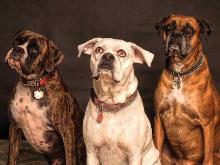 Obroża skórzana dla psa – o czym pamiętać przy jej zakupie?