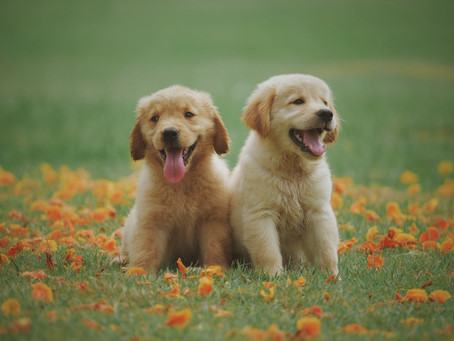 Karma dla psa junior – dlaczego warto wybrać inną karmę dla szczeniaka?