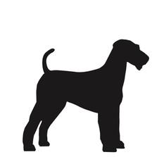 średni pies