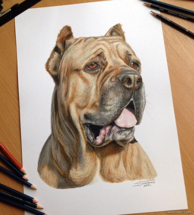 2-dog-color-pencil-drawing-by-dinotomic.