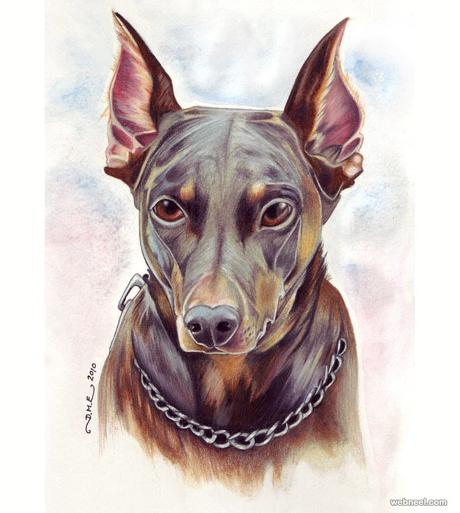 24-dog-colored-pencil-drawing-by-tavingt