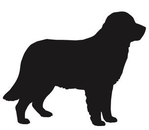 duży pies