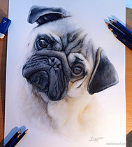 22-pug-dog-drawing-dinotomic.preview.jpg