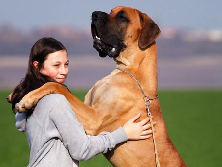 Czym powinna cechować się dobra karma dla dużych psów?