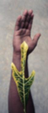 Nilanthe and Croton Codiaeum variegatum.