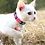 Thumbnail: Personalized Cat Collar With Bell Customized Kitten Collars Necklace