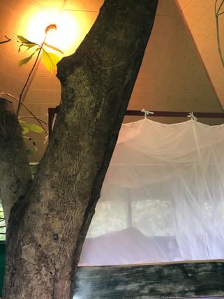 Tree House #9