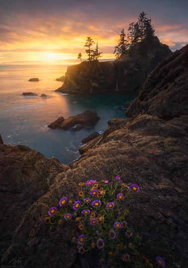 Sunny peace _ Oregon us