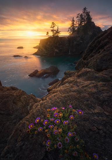 Sunny peace / Oregon us