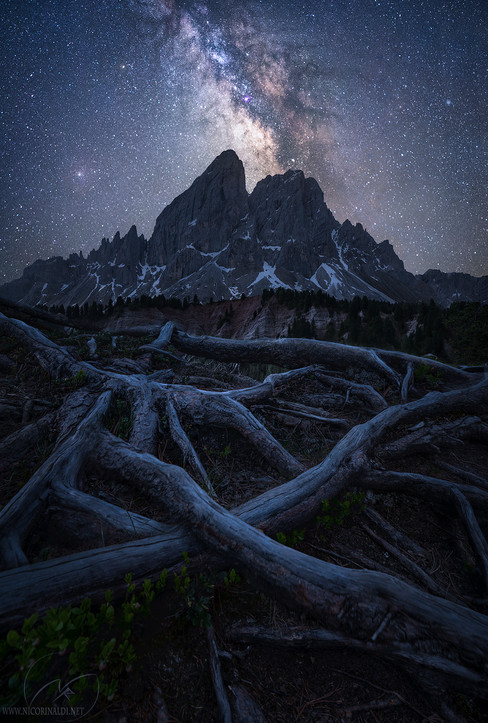 Rooted in galaxies