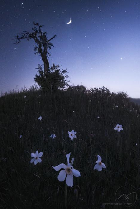 Magic moon light