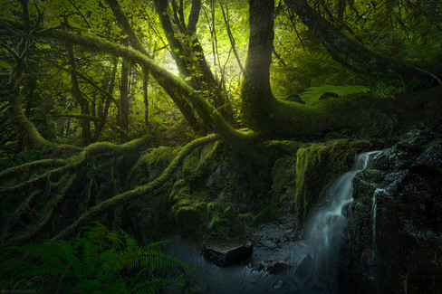 Deep in the wild / Oregon