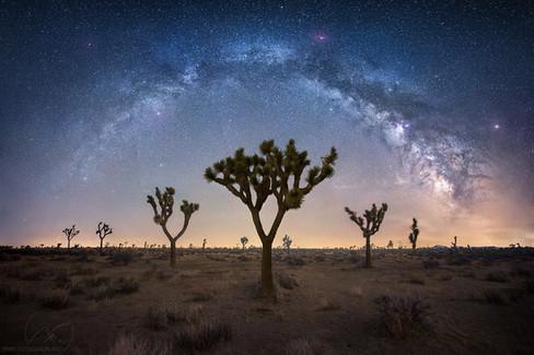 Desert Stardust