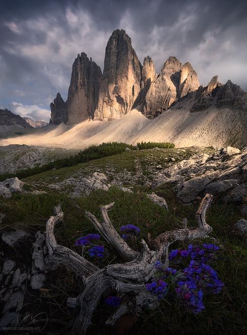 Alpine pride