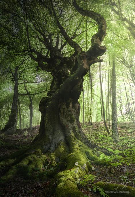 Silent Titan / forest tree