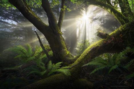 Lost in a fairy tale / Oregon