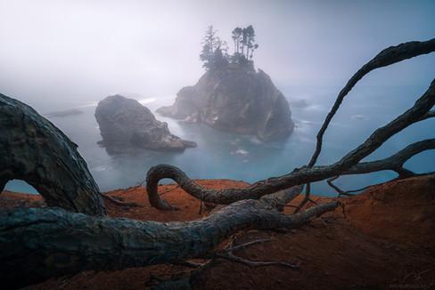 Infinite tangle / Oregon