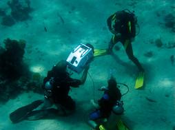 uw underwater redsea IMG 2195 1730.jpg