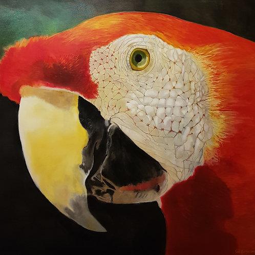 Arara Vermelha - 150 x 140 cm - por José Guilherme