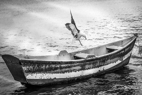 O barquinho e a gaivota - 40 x 60 cm - por Nando CR Guimarãess