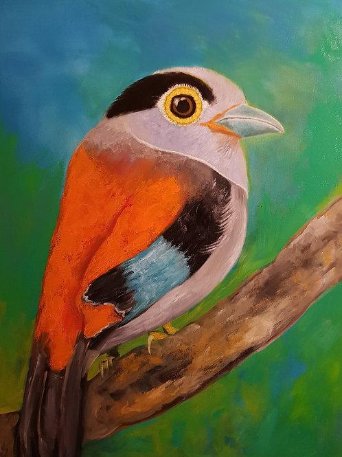 Pássaro de prata-de-peito -60 x 80cm - por José Guilherme