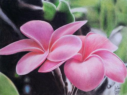 Flores da Avó -17,8 x 23,8 cm - por Gustavo Pauluk