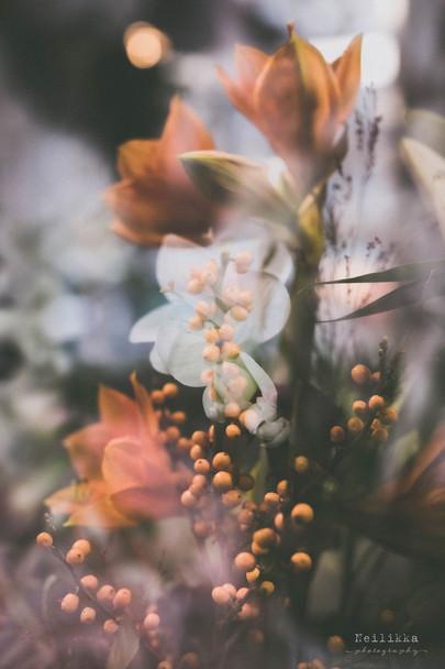 Neilikka photography