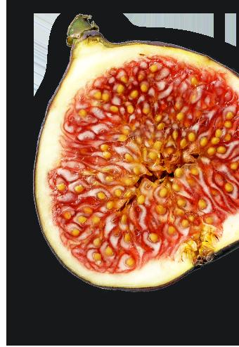 leisure-fruit2.png