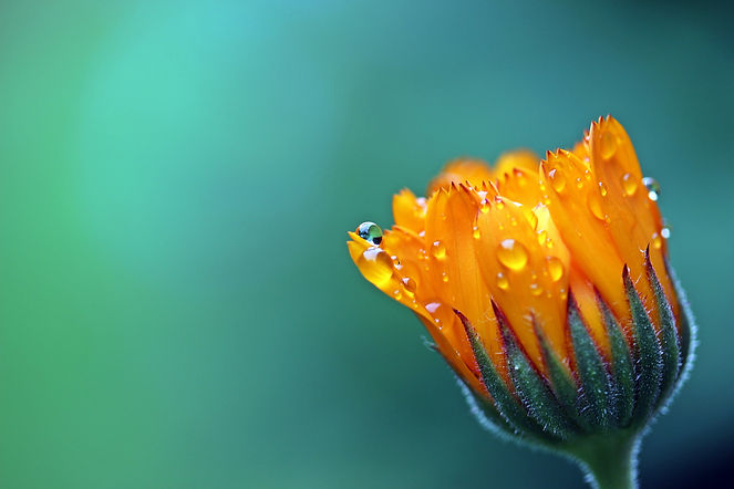 blossom-dew-plant-photography-leaf-flowe