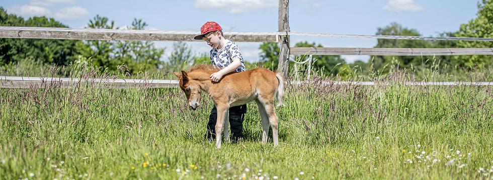 Pony_equifitness